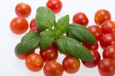 Fresh cherry tomatoes with basil, on white background — Stock Photo