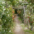 The romantic alley-way in the pergola from roses. Subtle and full taste garden and chateau La Chatonniere near Villandry. Loire Valley — Stock Photo