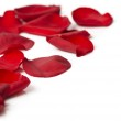 Day Valentine rose petals as background — Stock Photo #1833996