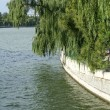 Lake and willows — Stock Photo