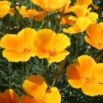 Yellow flowers — Stock Photo #44713311