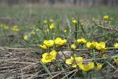 Yellow florets — Stock Photo