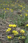 Gul blomma — Stockfoto