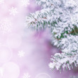 Christmas Background with Fir-tree and Real Snow — Stock Photo