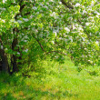 Beautiful spring tree with fresh green leaves and white flowers — Foto de Stock