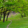 Spring green meadow with big oak trees and lonely trail — Stock Photo