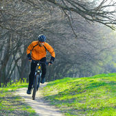 Cyclist Riding the Bike on the Trail in the Forest — Stock Photo