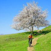 Cyclist Riding the Bike on the Green Hill with Beautiful Tree — Stock Photo