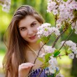 Stock Photo: Young Beautiful Woman with Pink Sakura Flowers
