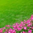 Wide Green Grass Meadow with Pink Flowers — Stock Photo