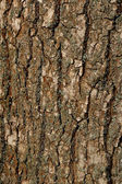 Texture of a Bark of an Old Oak Tree. Background Pattern — Stock Photo