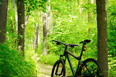 Mountain Bike on the Trail in the Forest — Stock Photo