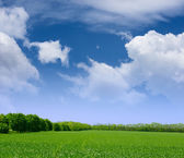 Wide Field of Green Grass, Forest and Blue Sky with Clouds — Stock Photo