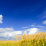 Beautiful Wheat Field under Dramatic Sky — Stock Photo #28802481