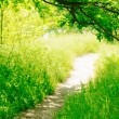 Trail in a Sunny Green Summer Forest — Foto Stock