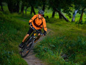Cyclist Riding the Bike in the Beautiful Summer Forest — Stock Photo