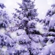 Christmas Trees under Beautiful Snow Cover — Stock Photo