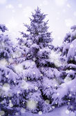 Christmas Trees under Beautiful Snow Cover — ストック写真