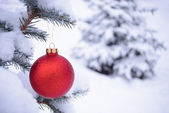 Beautiful Red Christmas Ball on the Fir Branch Covered with Snow — Stock Photo