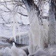 Beautiful Natural Ice Ornaments on the Trees — Стоковая фотография