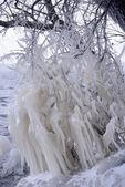 Prachtige natuurlijke ijs versieringen op de bomen — Stockfoto