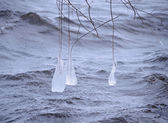 Long Beautiful Icicles on the Tree Branches near River — Stock Photo