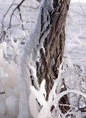 Beautiful Natural Ice Ornaments on the Trees — Stock Photo