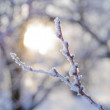 Bare Frozen Branch in the Beautiful Yellow Sun Beams — Stock Photo #38662905