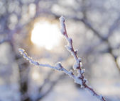Bare Frozen Branch in the Beautiful Yellow Sun Beams — Stock Photo