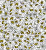 Daisies Background Ink Drawing — Stock Photo