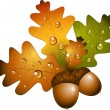 Oak branch with acorns - Imagen vectorial