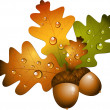 Oak branch with acorns — Imagen vectorial