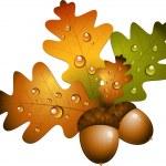 Oak branch with acorns — Stock Vector