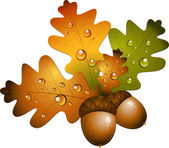 Oak branch with acorns — Vector de stock