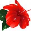 Red hibiscus flower - Stock Vector