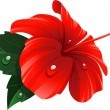 Red hibiscus flower - Image vectorielle