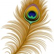 Peacock Feather — Stock Vector #24934469