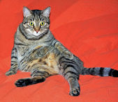 Cute cat relaxes on a red bed — Stock Photo
