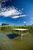 Reed in lake — Stock Photo