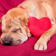 Valentine dog — Stock Photo #19730207