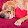 Valentine dog — Stock Photo #19730225