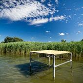Stroik w jeziorze — Zdjęcie stockowe