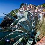 Riomaggiore, Cinque Terre, Italy — Stock Photo #38951297