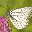 Stock Photo: Butterfly on flower