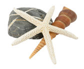Sea star and shell on stone — Stock Photo