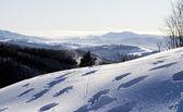 Tracks on the snow — Stock Photo
