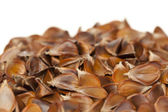 Fruit beech — Stock Photo