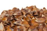 Fruit beech — Stock Photo