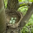 Bird nest — Stock Photo