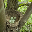 Bird nest — Stock Photo #18380557